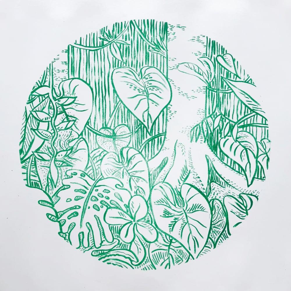 Image of Amazon Rain Forest