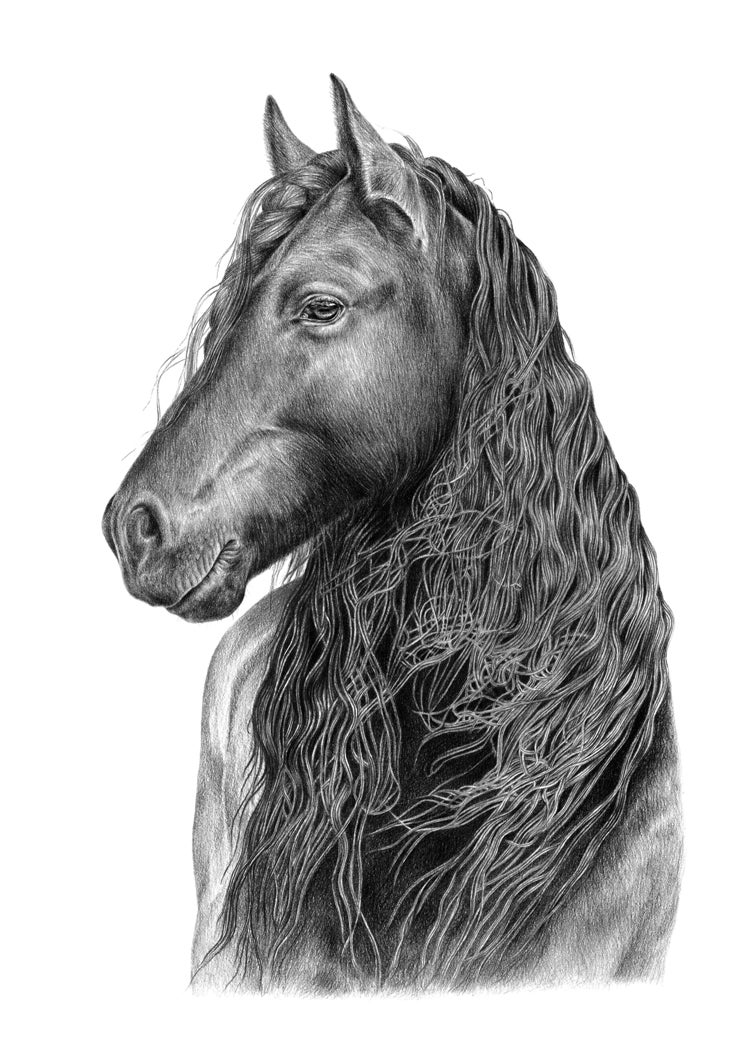 """A Glorious Friesian"". Fine art print of a horse portrait."