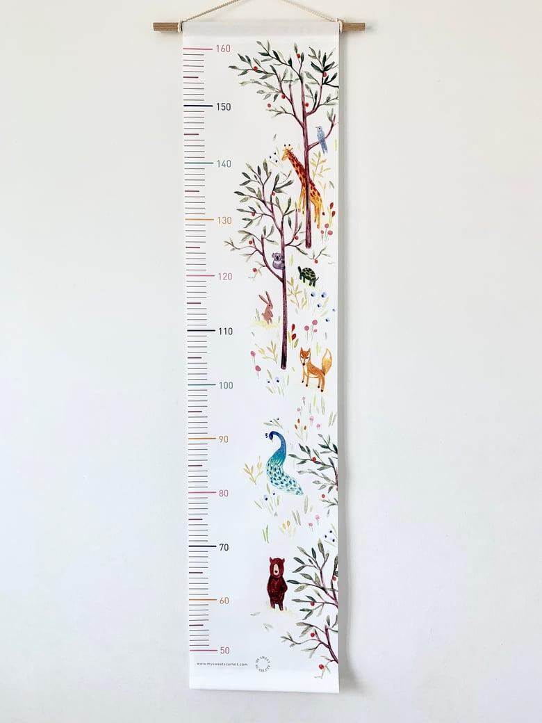 Image of Zoo Height Chart