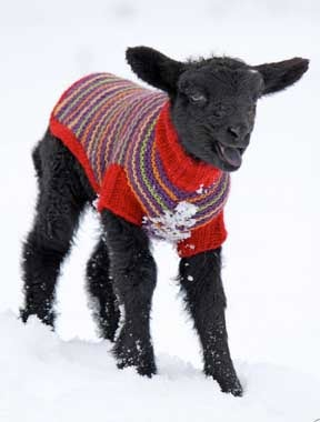 Image of Notecards - Set of 10 - Black Lamb in Sweater - FREE SHIPPING