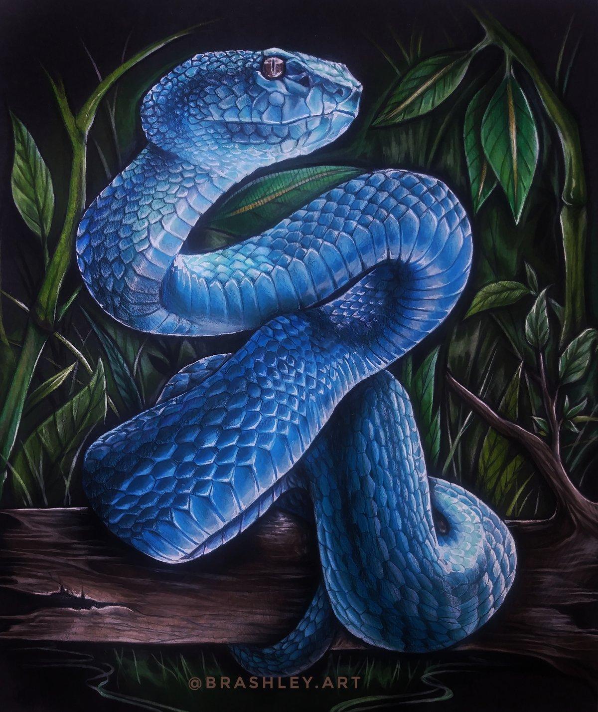 Blue Pit Viper Print