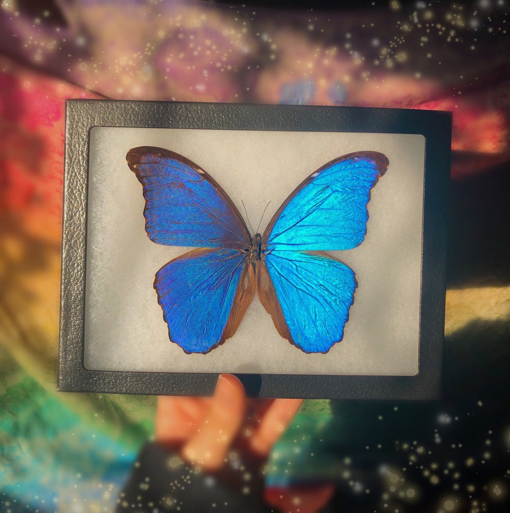 Image of Large Magical Framed Butterfly | CRUELTY FREE