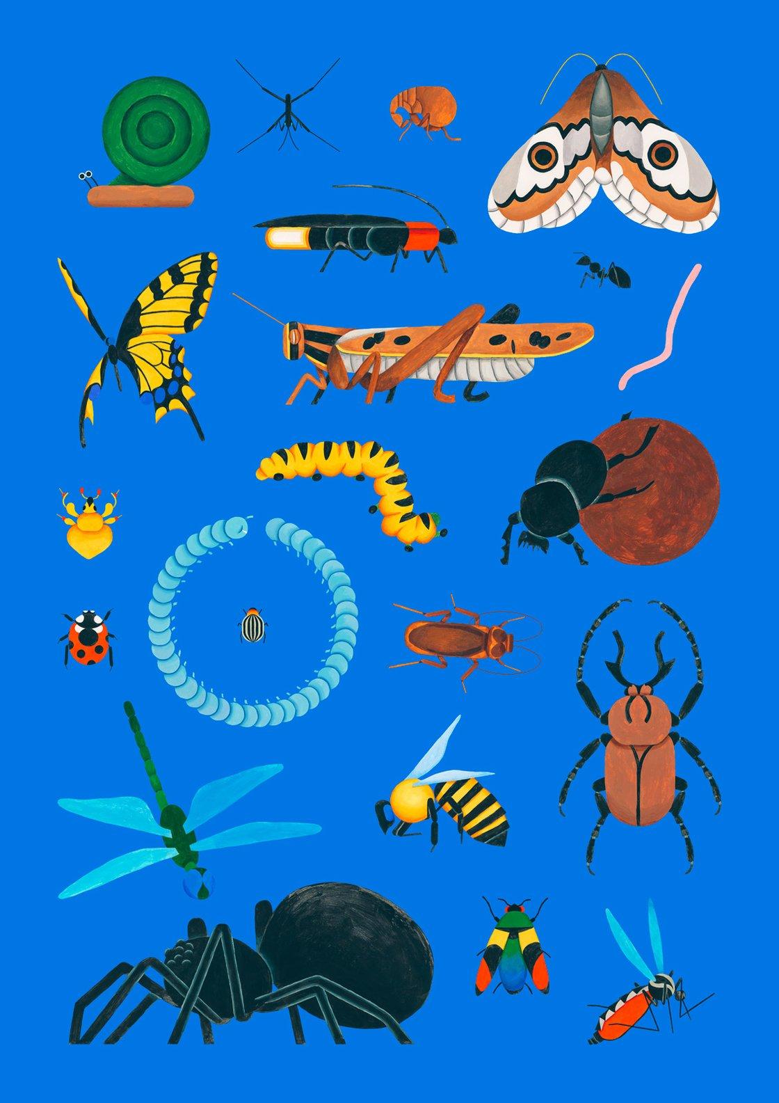 Image of Bugs