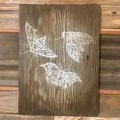 Image of Moths on wood