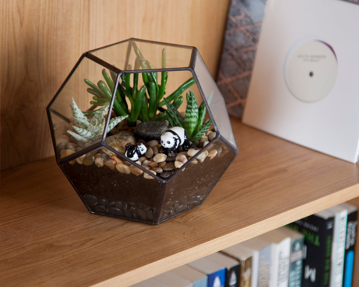 Image of Large Dodecahedron Terrarium