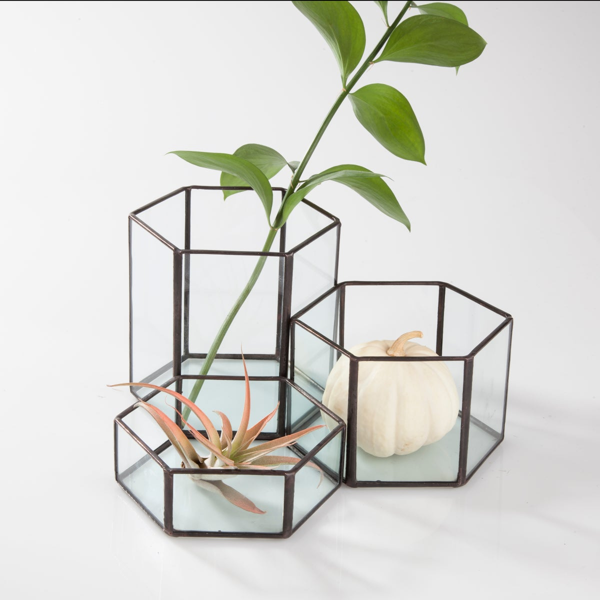 Image of Modular Hexagon Terrariums