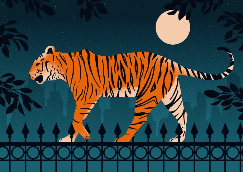 Image of Urban Tiger
