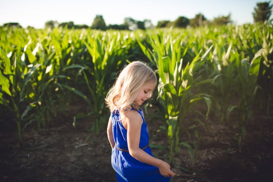 Image of Summer sunset cornstalk sessions