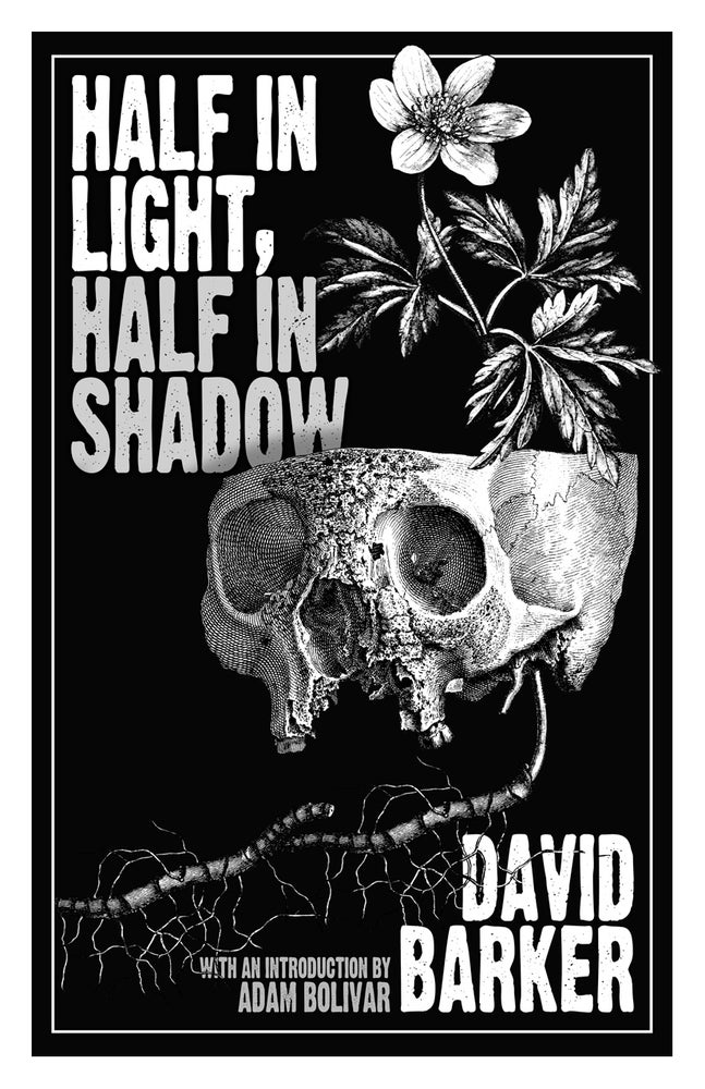 Image of HALF IN LIGHT, HALF IN SHADOW by David Barker *Signed Limited Edition*