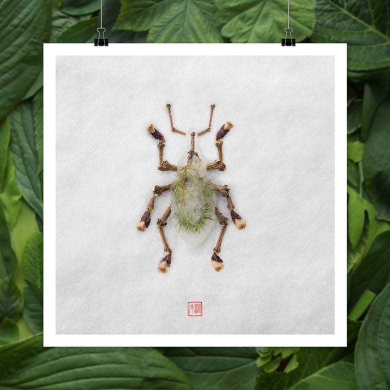 Image of Natura Insects Series 4 -Winter 2017-