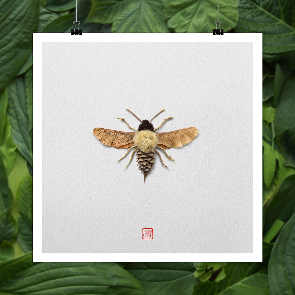 Image of Natura Insects Series 3 -Autumn 2017-