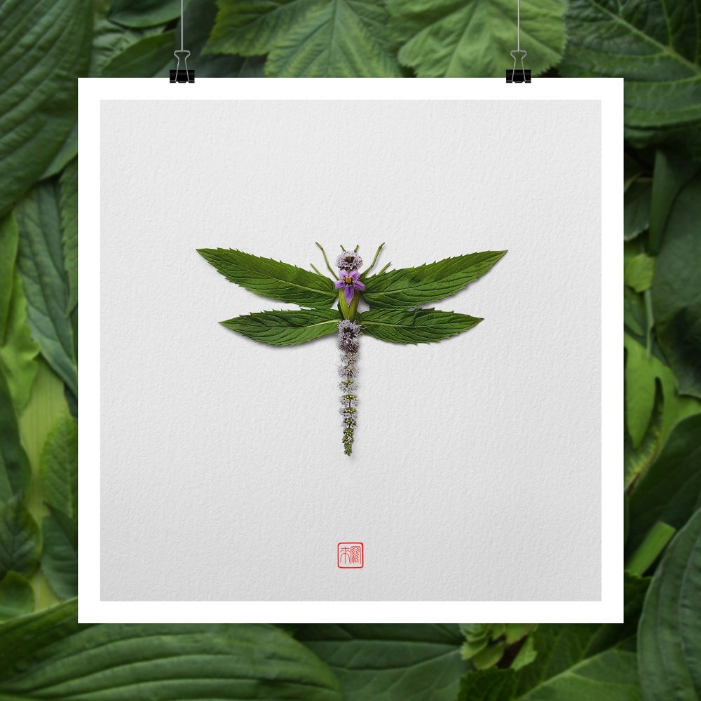 Image of Natura Insects Series 1 -Spring 2017-