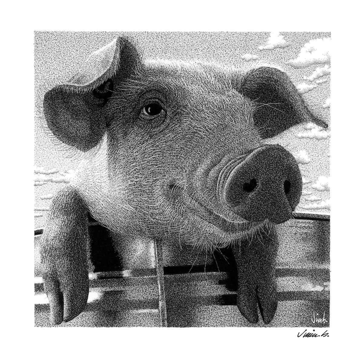 Image of HAPPY PIG photo print