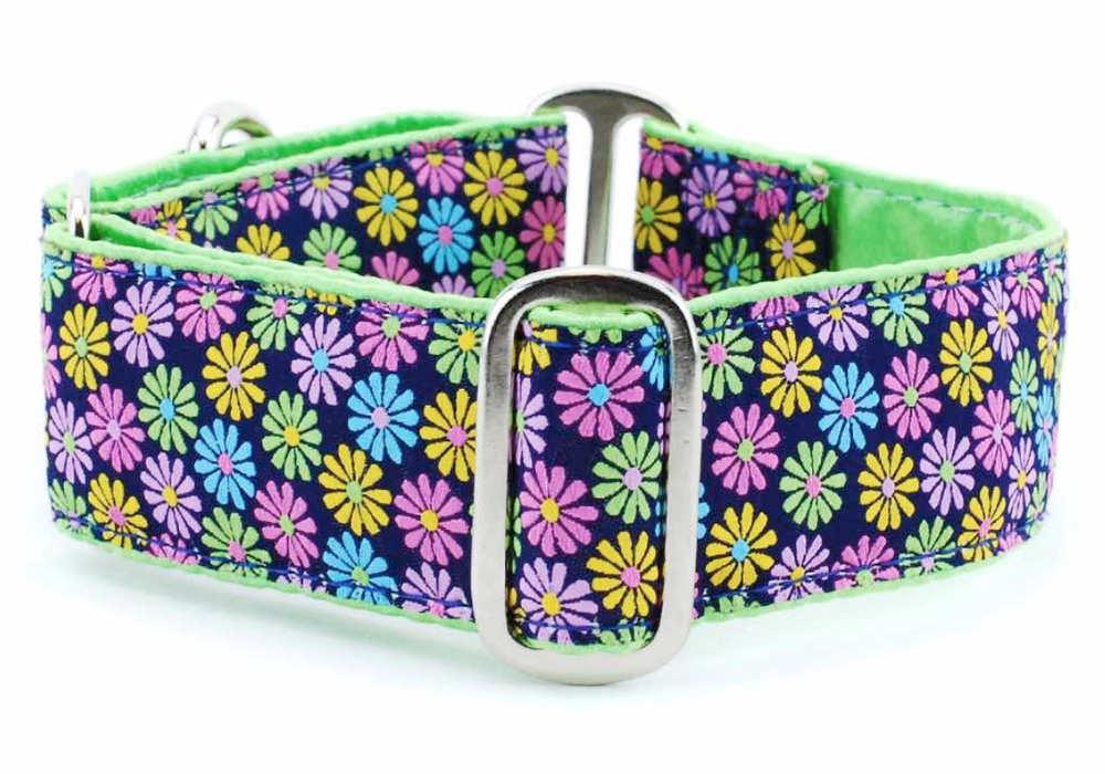 "Image of IncrediBullStella Custom Wide 1.5"" Collar"