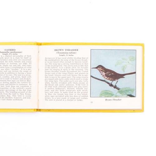 Image of Birds of America Books - Yellow & Blue Books