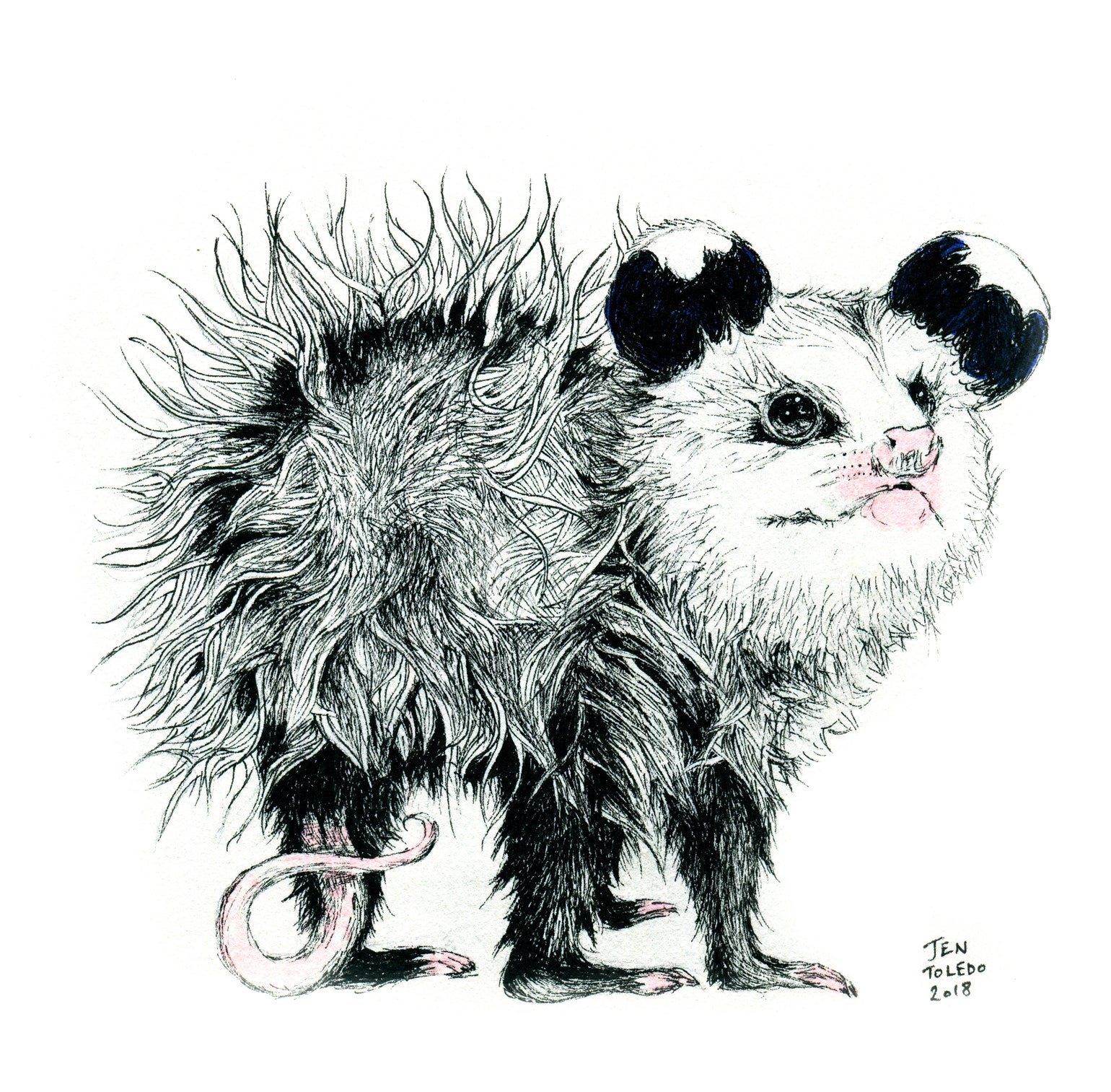 Image of Opossum Joey (Print)