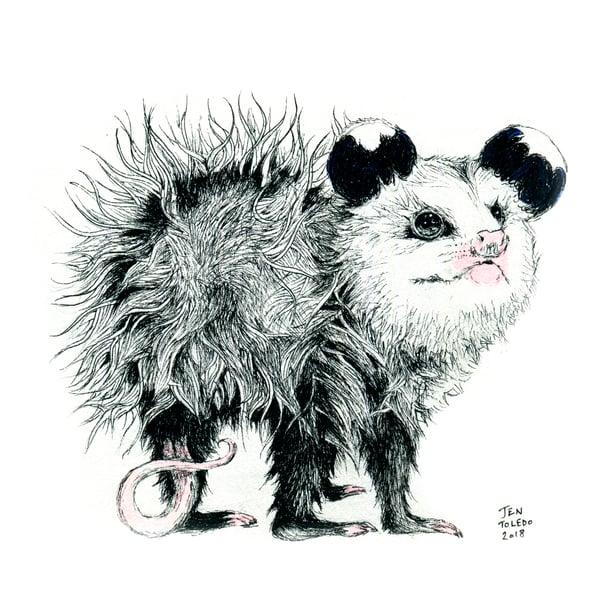 Image of Opossum Joey (Print)