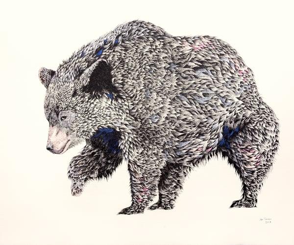 Image of Black Bear of Panthertown Valley