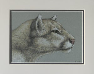 "Image of ""Mountain Lion"" Original Drawing"