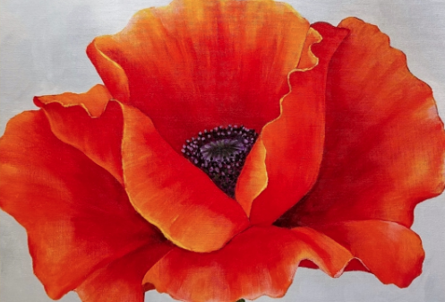 Image of Thursday 25th April O'Keefe Poppy  7-9PM