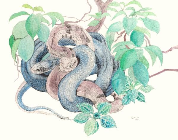 Image of Black Snake, Timber Rattler, Mountain Laurel & Rattlesnake Lily