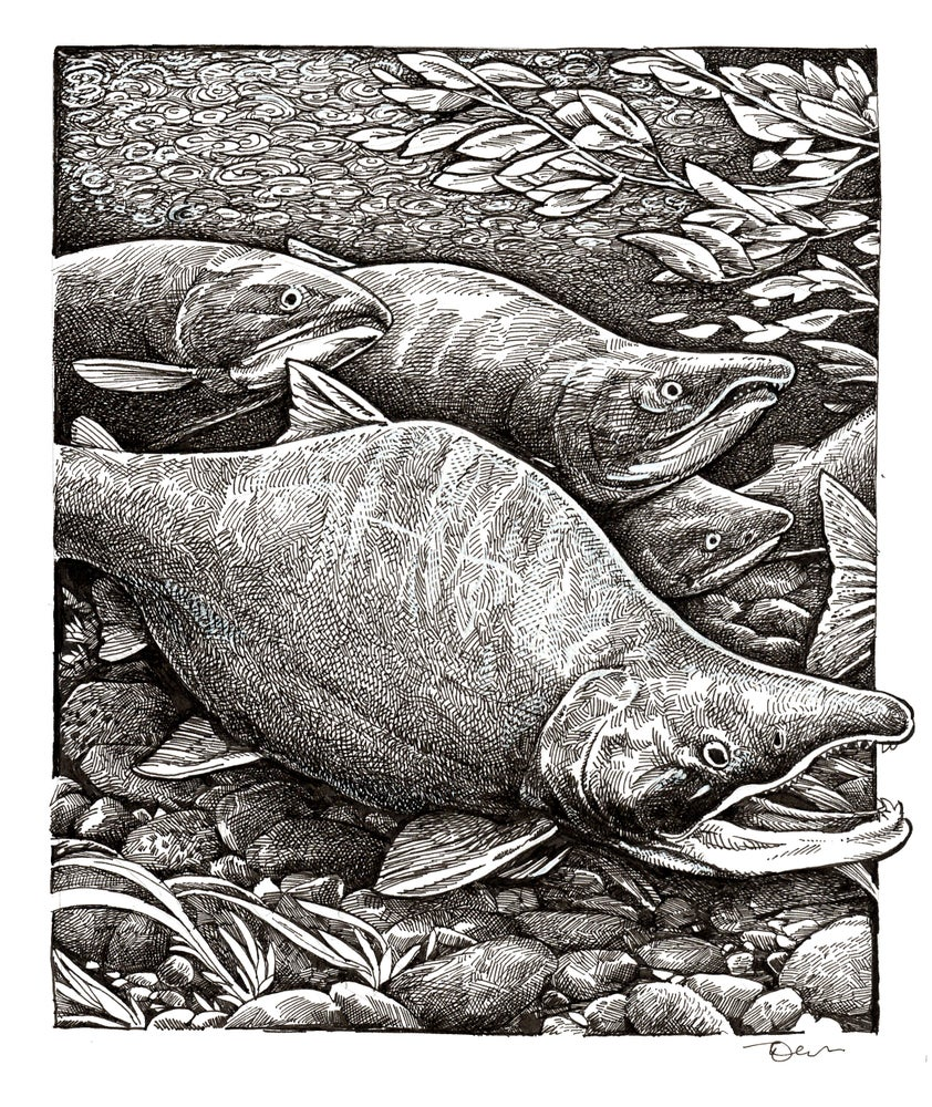 Image of Sockeye Stream Print