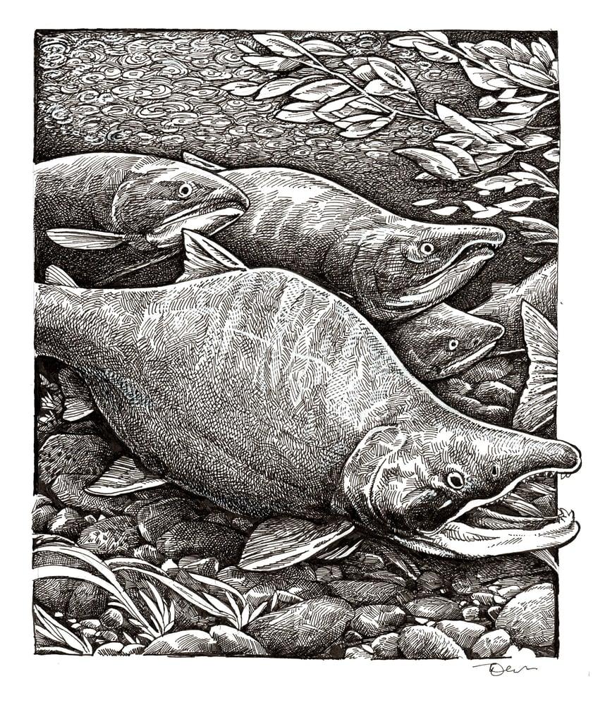 Image of Sockeye Stream Print