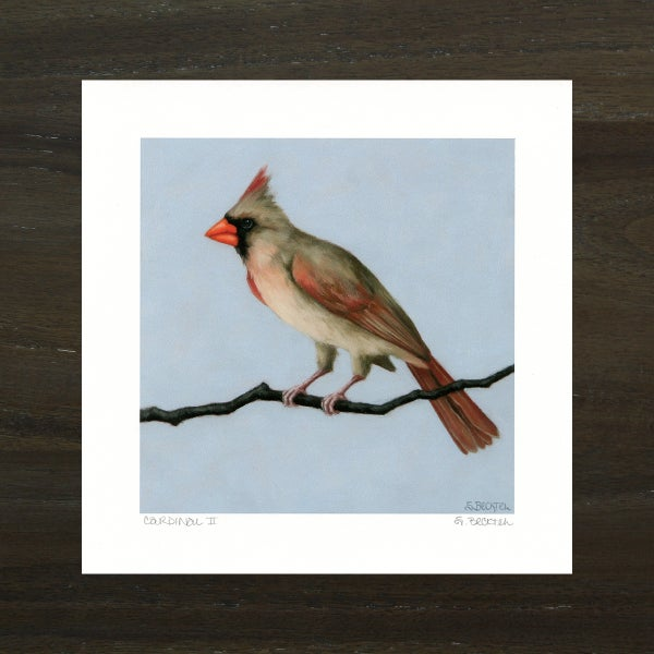 "Image of ""Cardinal II"" Art Print"