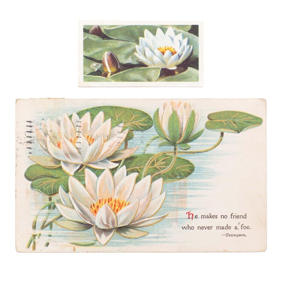 Image of Lilypad Postcard & Tea Card