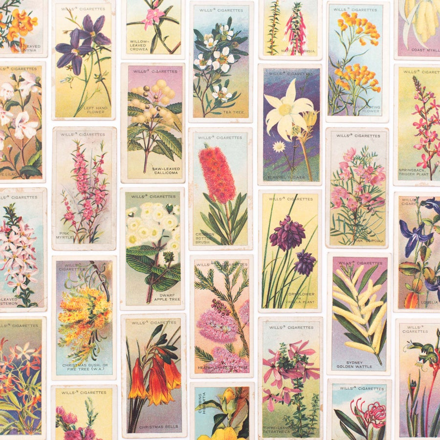 Image of 1913 Cigarette Cards - Australian Wild Flowers