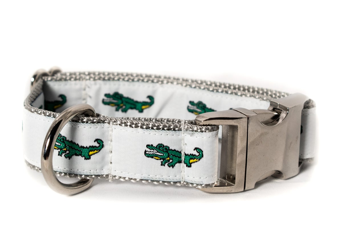 Alligator on white