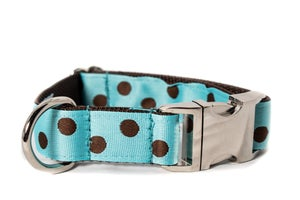 Image of Polka Dot brown on turquoise in the category  on Uncommon Paws.