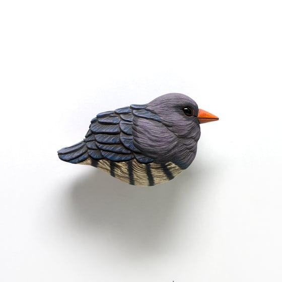Image of Violet Cuckoo