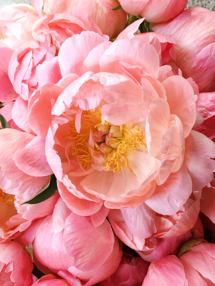 Image of Floral Fundamentals Workshop :: ROMANCED BY PEONIES