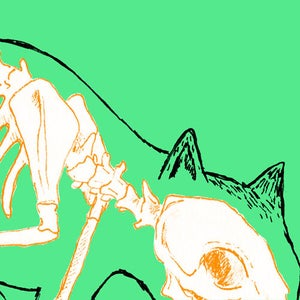 Image of Cat - Skin and Bones series
