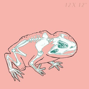 Image of Toad  - Skin and Bones series