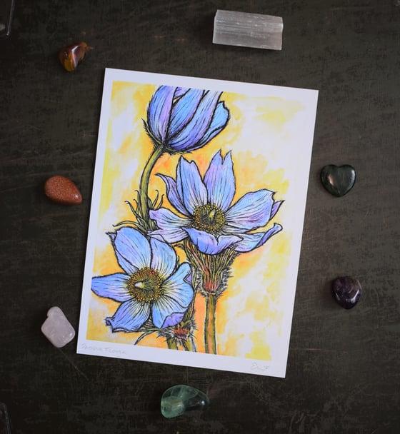 Image of Pasque Flower Print