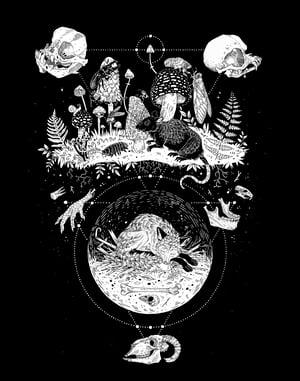 Image of Metamorphosis White