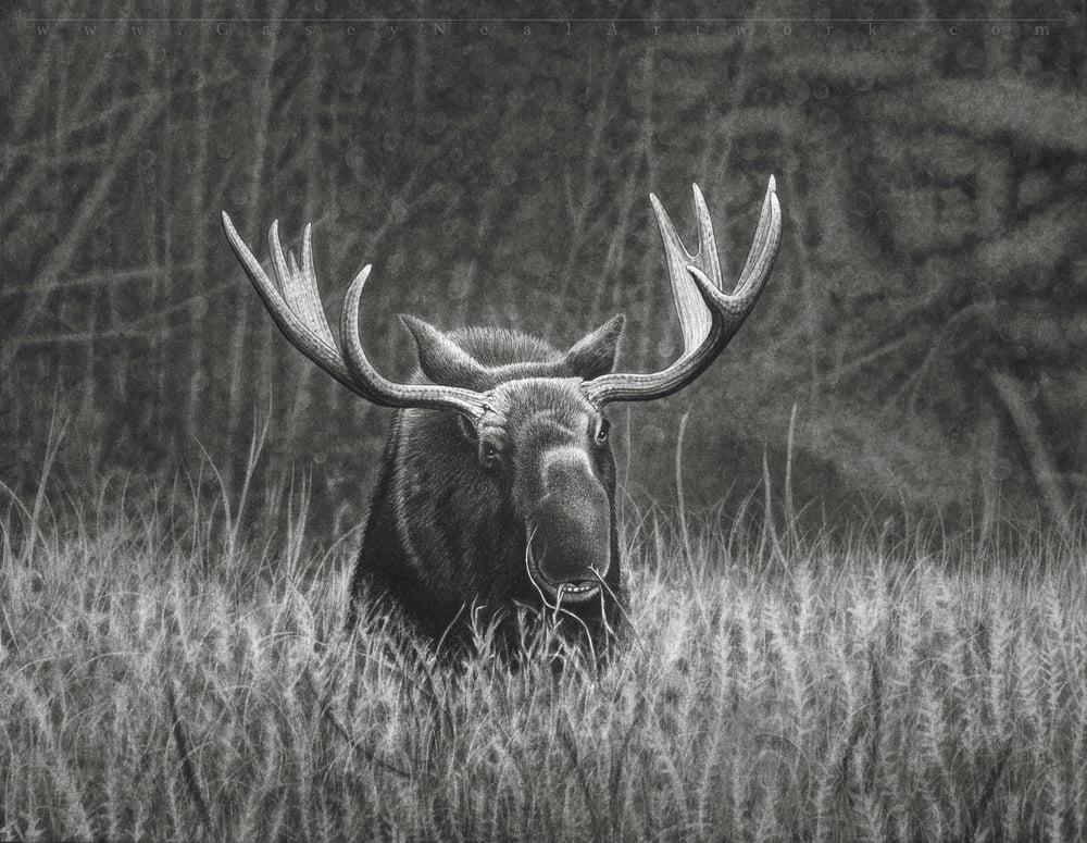 Image of Moose