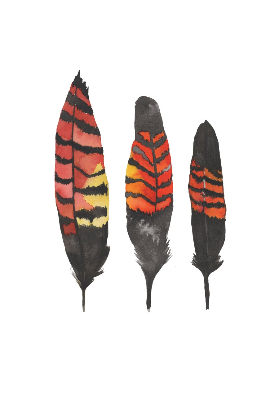 Image of Black Cockatoo Feathers