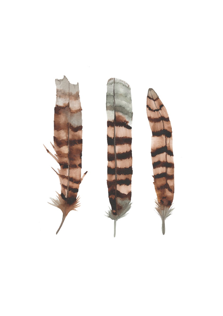 Image of Kookaburra Feathers
