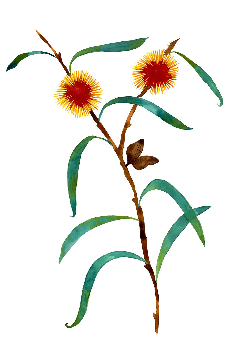 Image of Yellow Hakea
