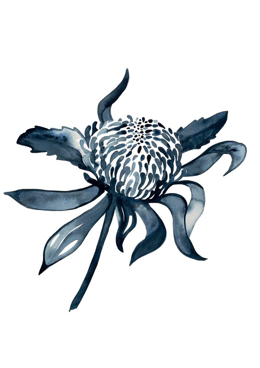 Image of Protea Blue - Australian