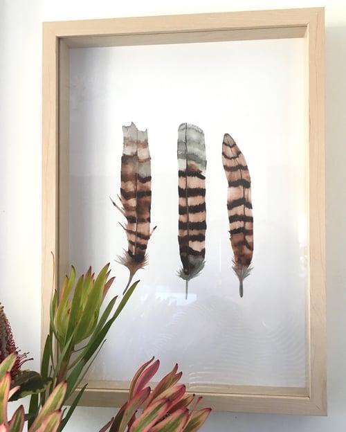 Image of Kookaburra Feathers