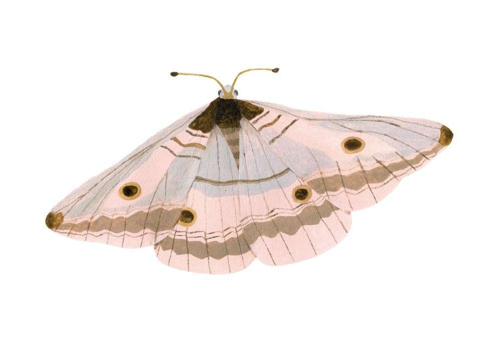 Image of Moth