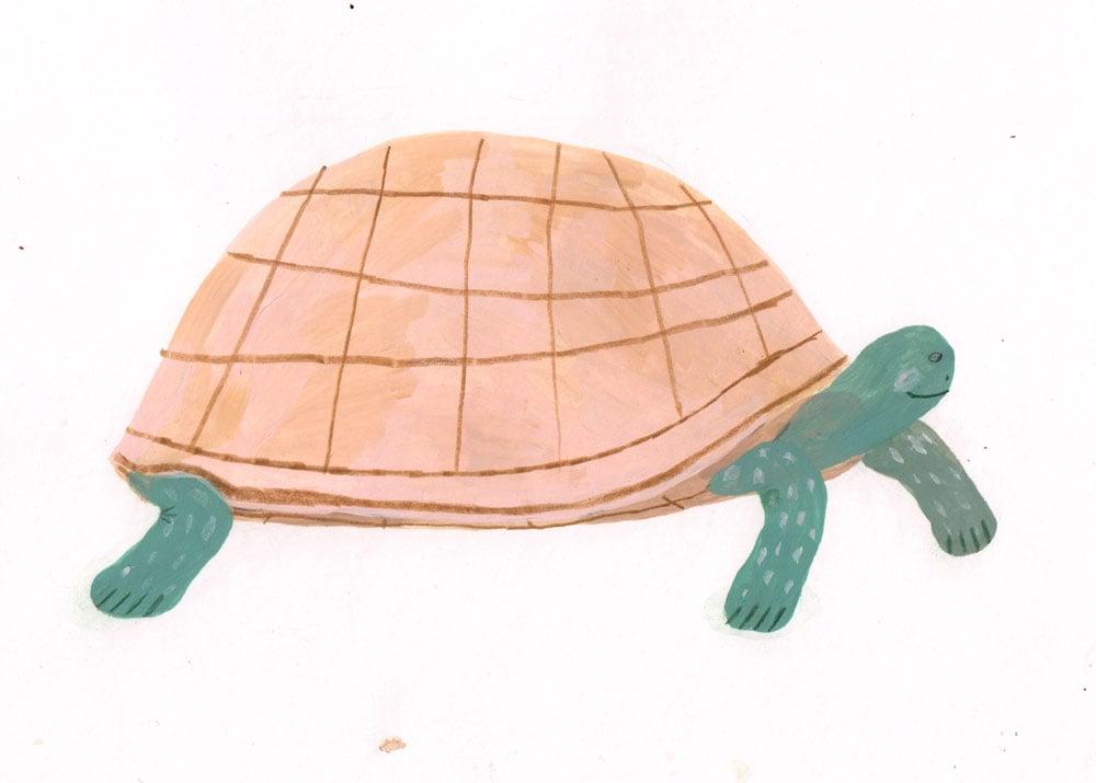 Image of Turtle (Original)