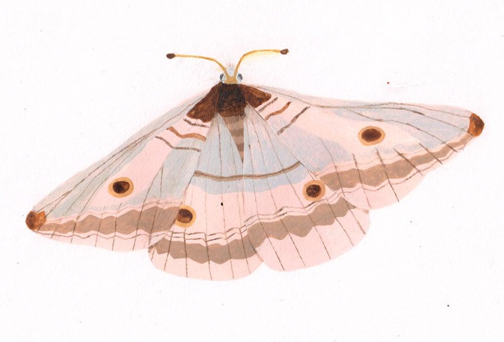 Image of Moth (Original)