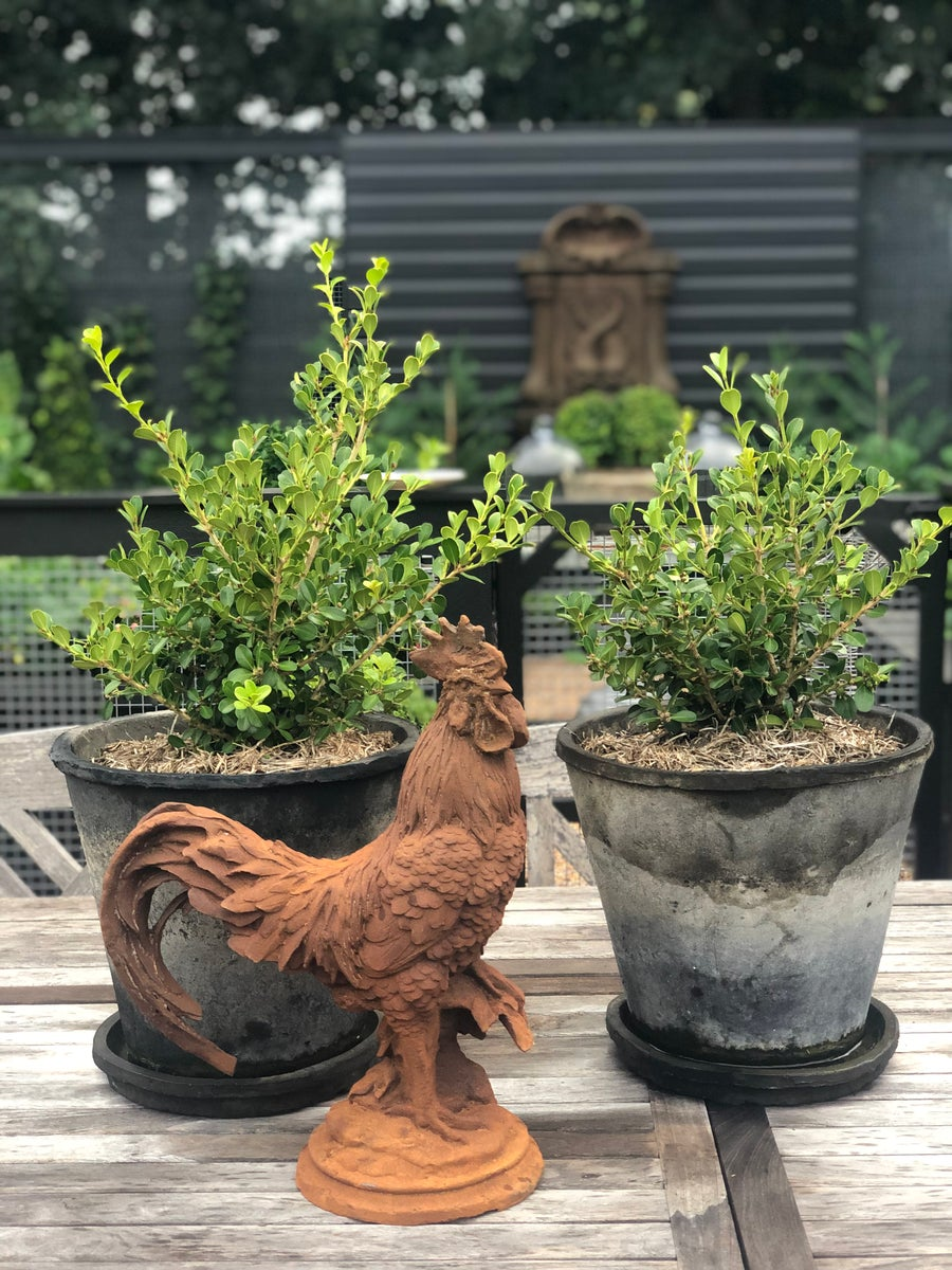Image of Cast Iron Rooster