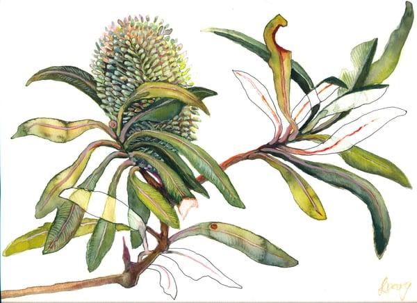 Image of Print Banksia Integrifolia- Linda Davy