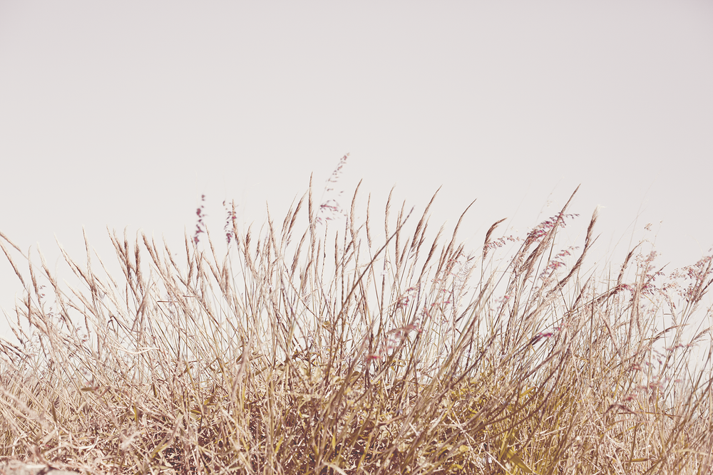 Image of BLUSH GRASS - A2 poster print